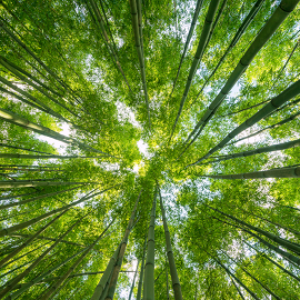Green Up Your Life: Learn Practical Action Items for Living a Greener, Less Toxic Life for You, Your Family, and Our Planet header image