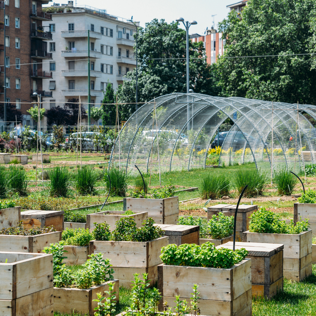 Urban Agriculture Today: Economics, Successes, and Challenges Header Image