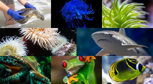 National Aquarium Virtual Tour Header Image